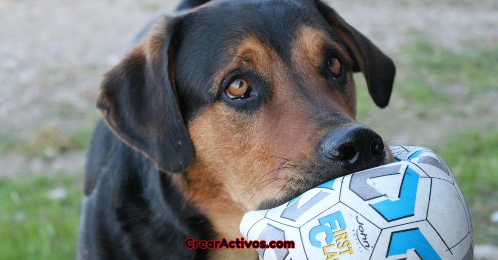 Un perro pidiendo juegar con su amo